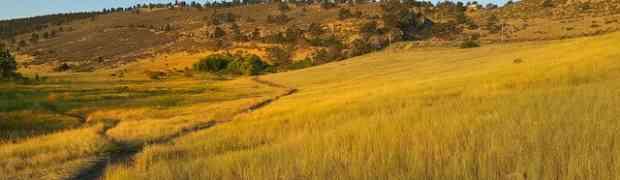Climat & biodiversité : passage à l'action directe avec le WWF